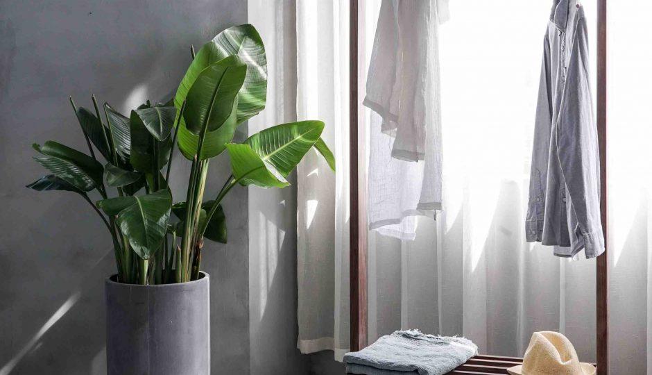 plante intérieure dans un pot blanc